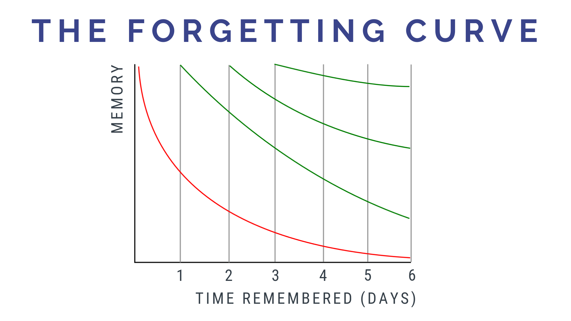 The Forgetting Curve: Language Learning